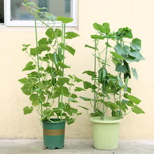 45cm Flower Plants Climbing Rack Support Shelf Climbing Rattan Plant Stand Flower Stand Garden Supplies Tool
