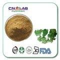 freeshipping 200g/ bag epimedium herb extract powder Horny Goat Weed 3% extract powder