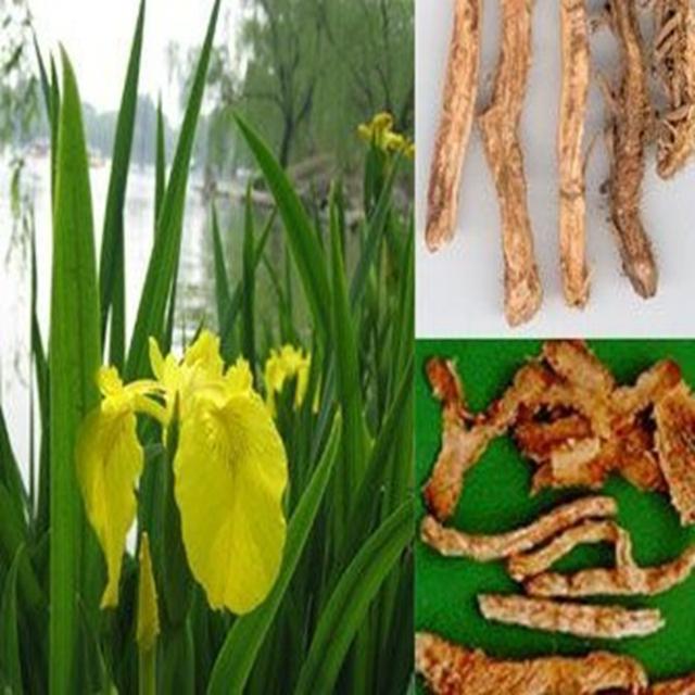 100g top qualidade Rhizoma Anemarrhenae Extrato com melhor preço e frete grátis