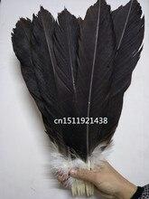 도매 100 희귀 천연 큰 독수리 꼬리 깃털 35 40 cm/14 16 inche 장식 보석 액세서리 무대 성능 diy
