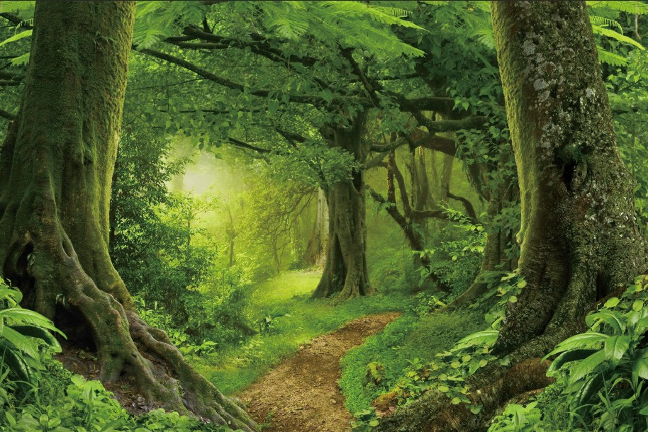 Laeacco Jungle Forest Backdrops Tree Moss Green Grass Cave