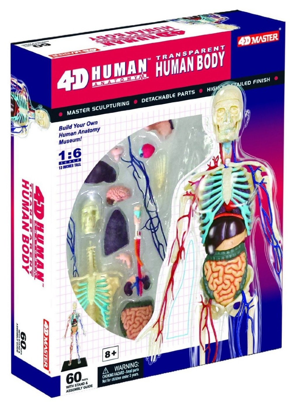 Dentist Lab Dental Demonstration 4d Puzzle Human Anatomy 3d Model