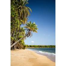 Laeacco Photo Backdrops Tropical Sea Beach Palm Tree Sand Blue Sky Holiday Baby Scenic Photographic Backgrounds For Studio