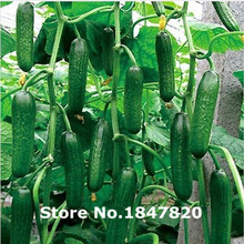 GGG 100pcs long fruit cucumber seeds + secret gifts,Cuke Seeds, Green vegetable Seeds, flower plants bonsai,free shipping(China)