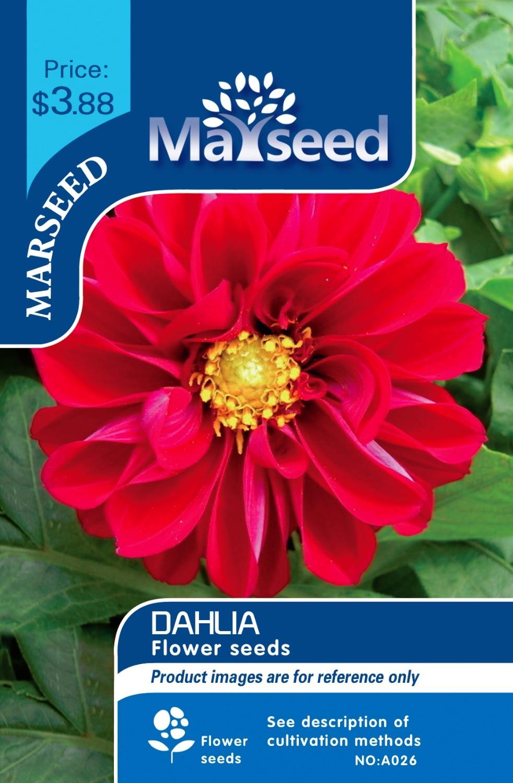 Marseed Low Budget Diy Backyard 50 Dahlia Flower Seeds Look Good