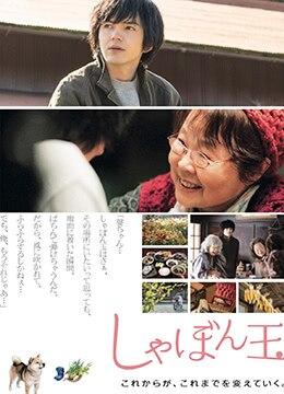 《肥皂泡》2017年日本剧情电影在线观看