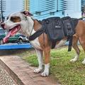 Serviço militar do exército onetigris cães acessórios para deixar o cão cão arnês colete molle tático viajar com você!