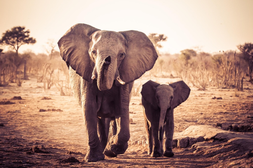 """African Elephants Fabric poster 20x13 / 36x24"""" Decor 03-in ... - photo#32"""