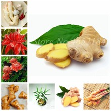 100 Pcs/ Lot Perennial Ginger Bonsai, Cook Food Vegetable, Chinese Zingiber Balcony Green Fruits & Vegetables for Flower Pot(China)