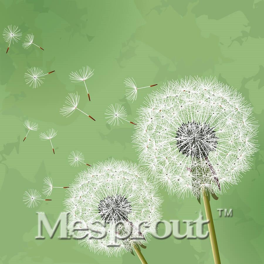 500pcs Mongol Dandelion Seeds Balcony Bonsai Flower Seeds Smell