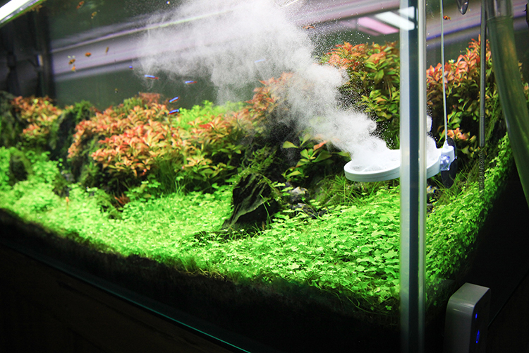 Buy algae remove chihiros doctor twinstar for Green water in fish tank