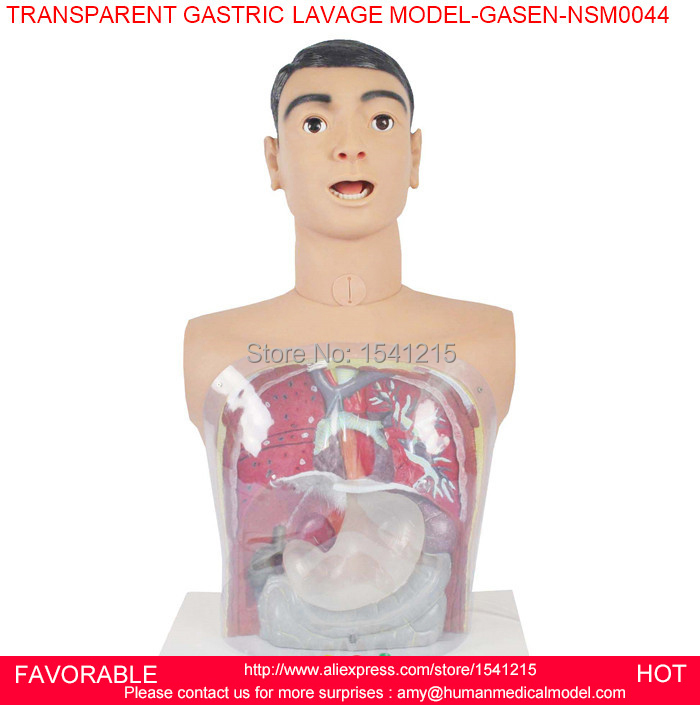 MEDICAL MANIKINS,NURSING MANIKIN,GASTRIC LAVAGE SIMULATOR, GASTRIC LAVAGE MODEL,TRANSPARENT GASTRIC LAVAGE MODEL-GASEN-NSM0044 gastric anatomy model chinon bix a1045 wbw266