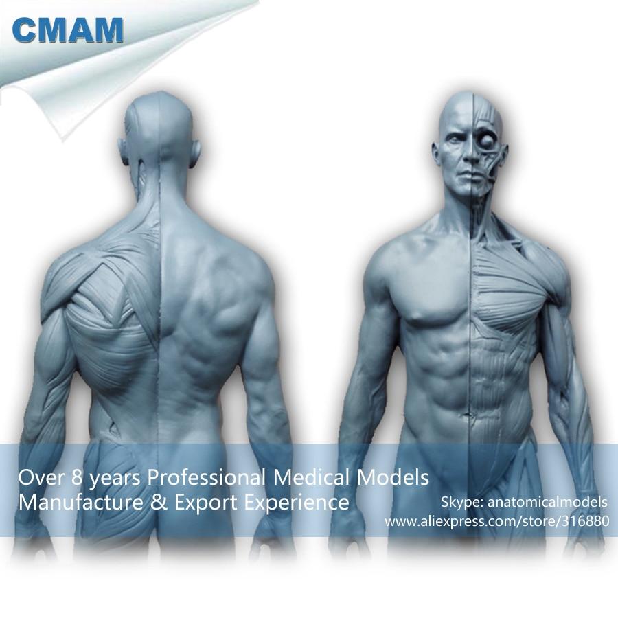 CMAM PRC23 PU Material 1:6 gris Cuerpo Humano modelo de enseñanza de ...