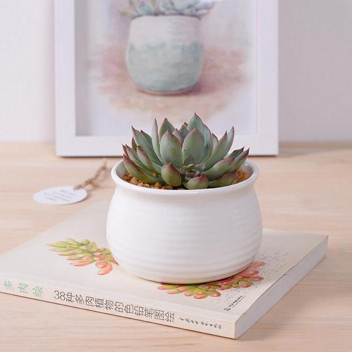 Hot sale white glazed ceramic flower pots small round for 6 ceramic flower pots