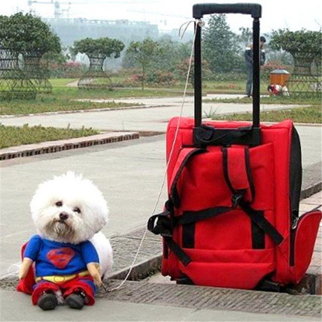 Superman Puppy Clothing for dogs and cats