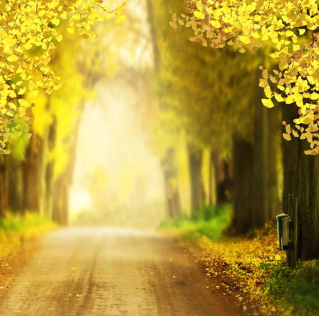 8x8ft autumn morning mist road yellow tree path sunshine forest custom photo studio background - Tree images free download ...
