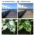 Photochromic transición Espejo Polarizado Lentes De Repuesto Para Batwolf Marco de Gafas de sol 100% protección UVA y Uvb