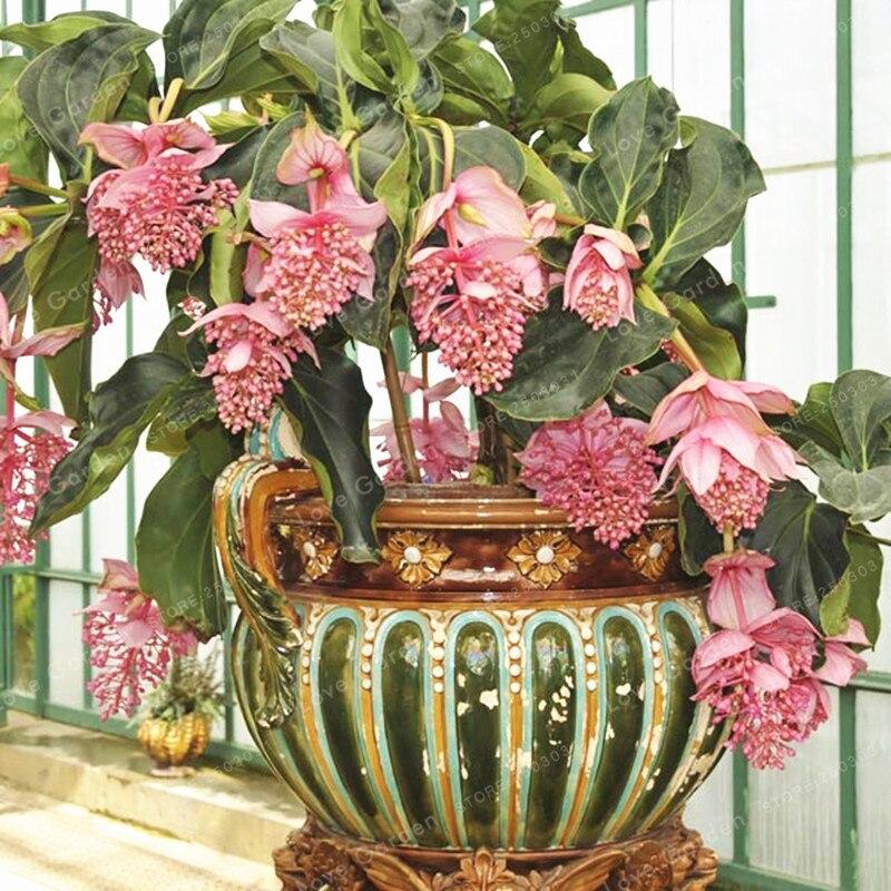 экзотические растения для дома с фото работала следственная