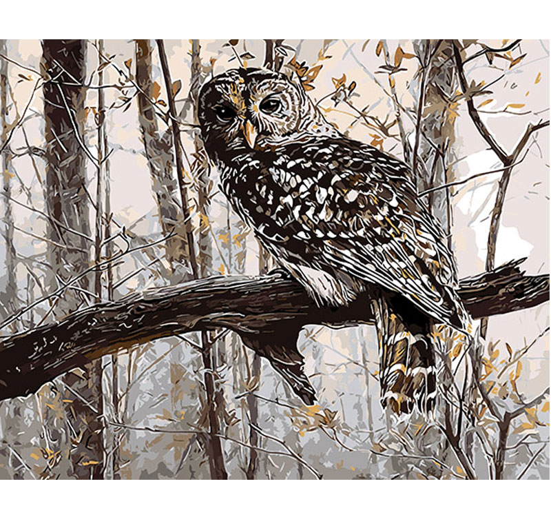 MURAN Framed Pictures Painting By Numbers Owl DIY Digital Oil Painting On linen Home Decoration Wall Art 40*50cm 11