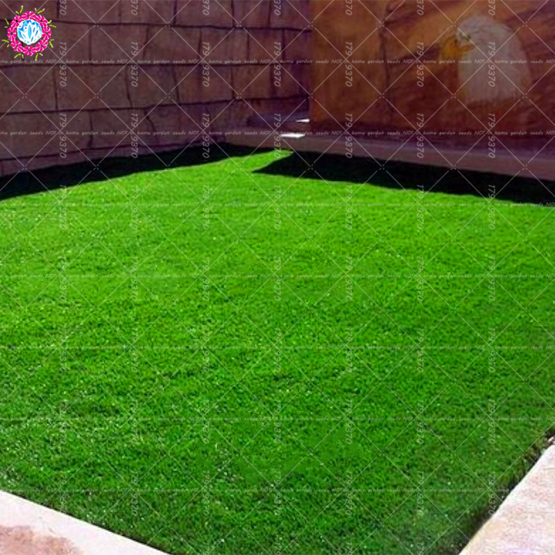 500 stks Graszaad Groene Bron Turfgrass Zaden groenblijvende Gazon - Tuinbenodigdheden