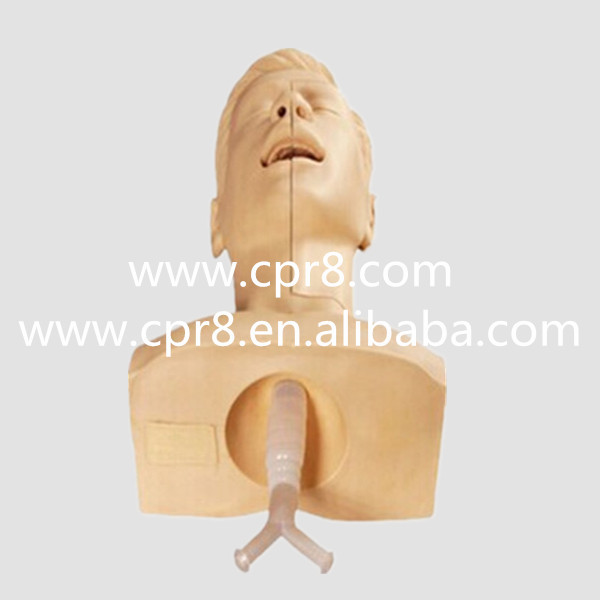 BIX-H85 Advanced Sputum Suction Training Model, Medical Aspiration Of Sputum Training Simulator, Aspiration Of Sputum Manikin054BIX-H85 Advanced Sputum Suction Training Model, Medical Aspiration Of Sputum Training Simulator, Aspiration Of Sputum Manikin054