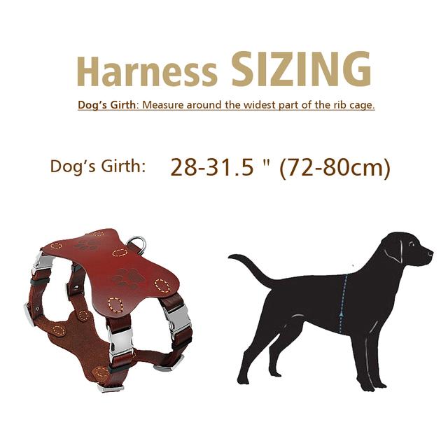 Pitbull Terrier Collars Harnesses