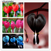 100 pcs/bag Dicentra Spectabilis Bleeding Heart classic cottage garden plant, heart-shaped flowers in summer,rare orchid