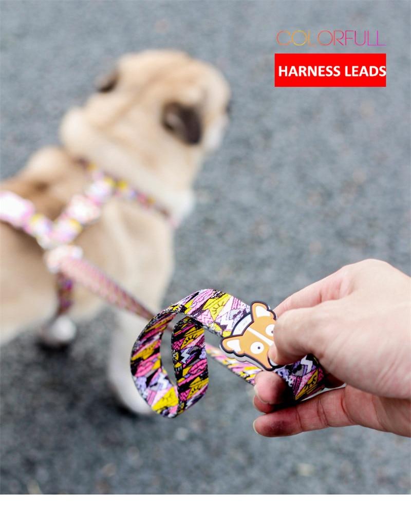 Dog Collars  (8)