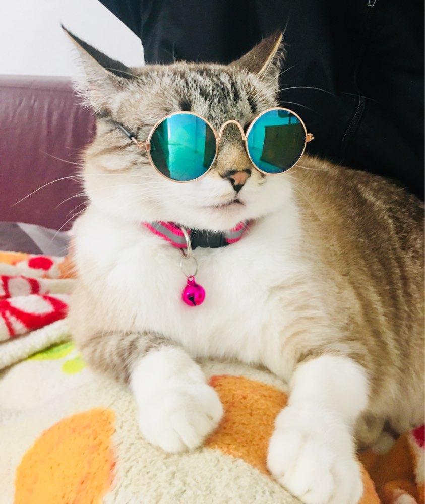 фото для авы солнечная кошка можно найти