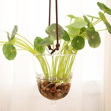 Mkono Hanging Glass Vase Transparent Hydroponic Plant Container Terrarium Flower Pot for Garden Home Indoor Decoration