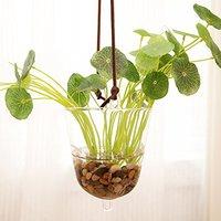 Hanging Glass Planter Vase Flower Plant Pot Container Terrarium Planter Home Decoration