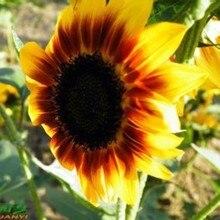 Цветок Семена Подсолнечника, оригинальной Упаковке 20 шт. Сад бонсай семена цветов, легко Расти Подсолнечник annuus