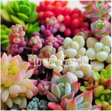 50seeds/pack 22 Kinds Mix Succulent seeds Lithops Pseudotruncatella Bonsai plants Seeds for home & garden,#7XZQ5Q