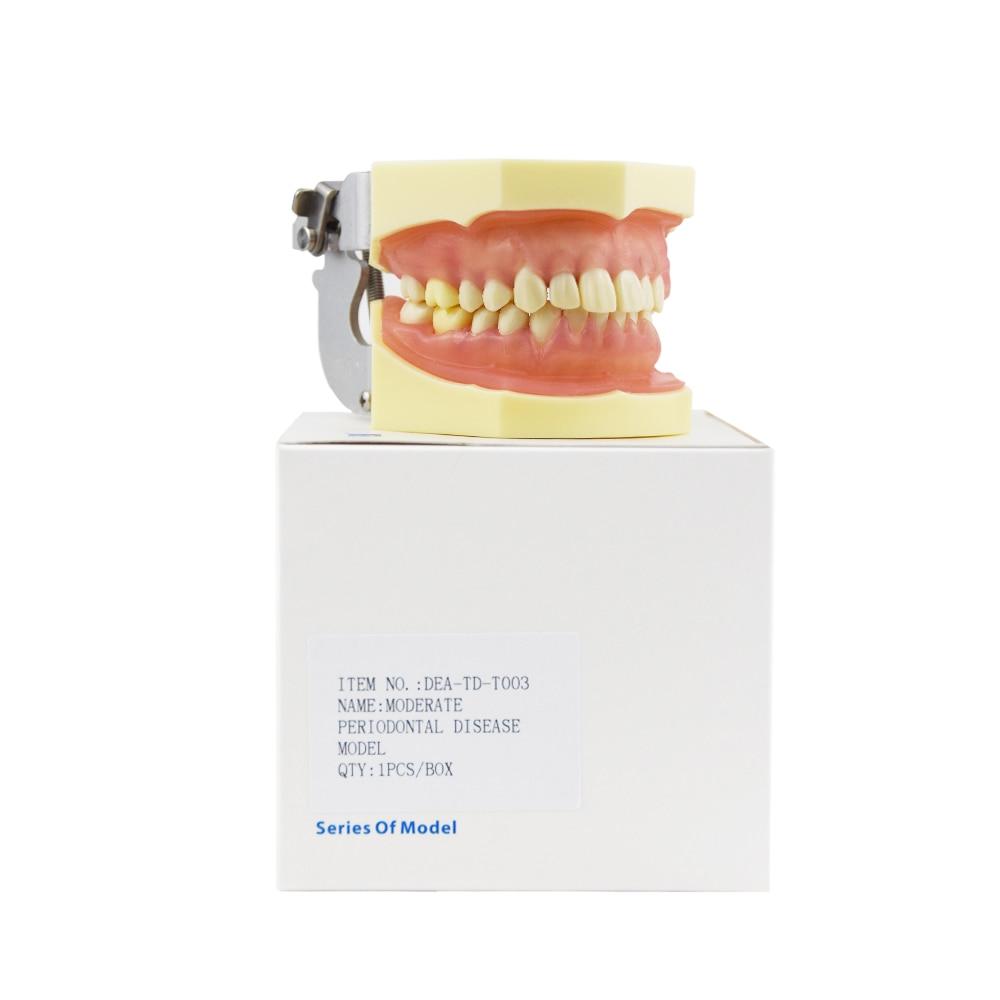 ٩ ۶odontologia Dentista Clareamento Dental Teeth Model Dental