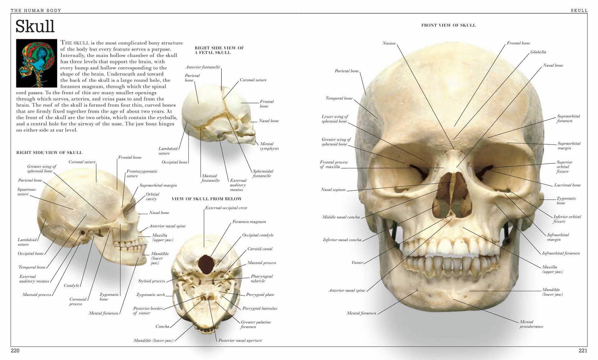 Винтажная энциклопедия для анатомии человека, плакат для тела, Классические холщовые картины, винтажные настенные плакаты, наклейки, домашний декор, подарок