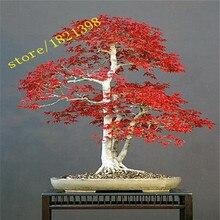 50 Мини Красивые Японские Семена Красный Клен Бонсай, DIY Бонсай * СВЕЖИЕ КЛЕН СЕМЕНА * Бесплатная доставка