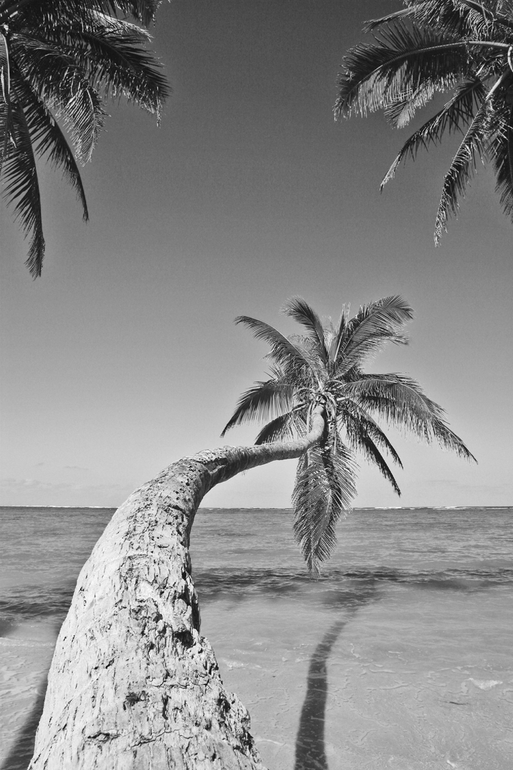 photographic picture print on canvas black and white pictures Hawaii - Palms along the Beach  canvas painting modern home decor