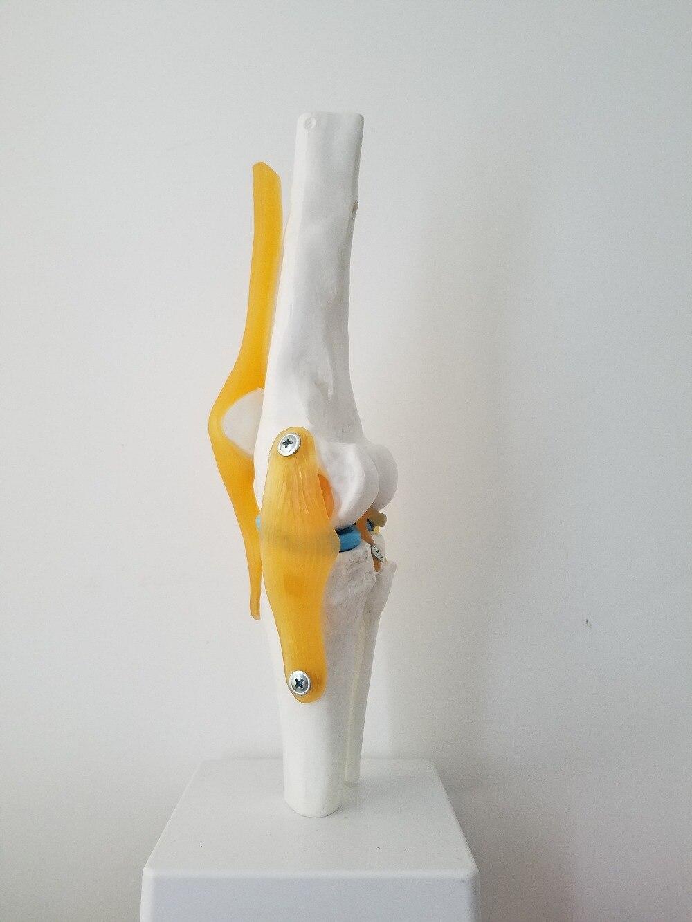 Schön Die Menschliche Knie Anatomie Bilder - Menschliche Anatomie ...
