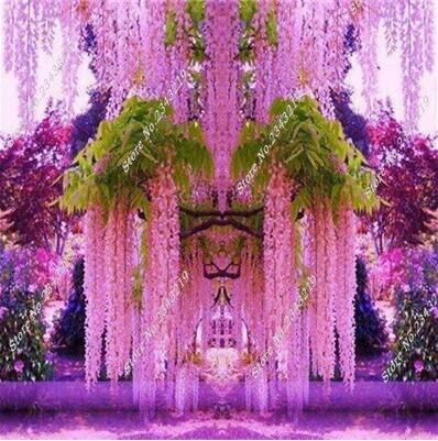 Glicine bonsai per la vendita acquista a poco prezzo for Glicine bonsai prezzo