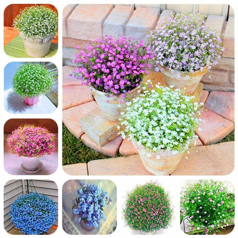 100pcs beautiful starry sky, gypsophila bonsai, decorative plants, natural, wedding, family bedroom, home decoration  flowers