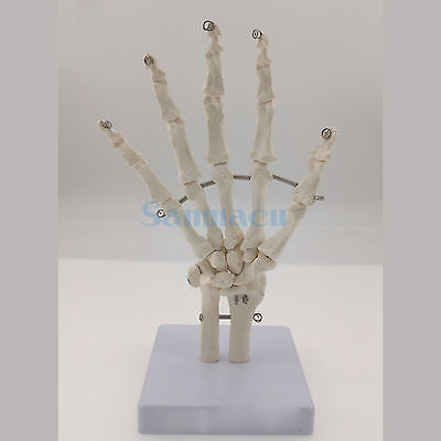 Human Hand Joint Life Size Bone Skeleton Anatomical Model Medical Anatomy for Medical font b Science