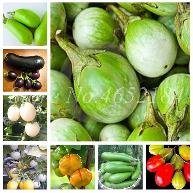 150 Pieces Imported Eggplant De Vegetable Raras Garden Plant Succulents Rounded Melon Outdoor Juicy Mini Jardim Natural Growth