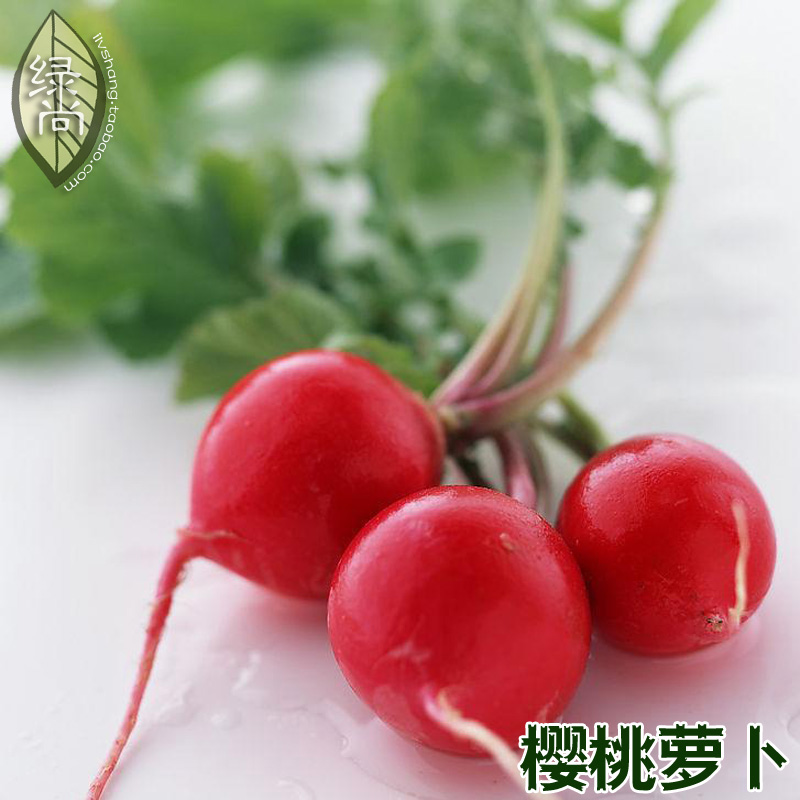 Red Cherry Radish Tablets Fruit Radish 4 Seasons Plant Garden Balcony Potted Fruits And Vegetables Seeds 10 Seeds
