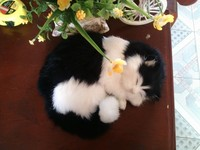 cute simulation black&white sleeping cat polyethylene & fur cat model gift about 25x8.5cm188