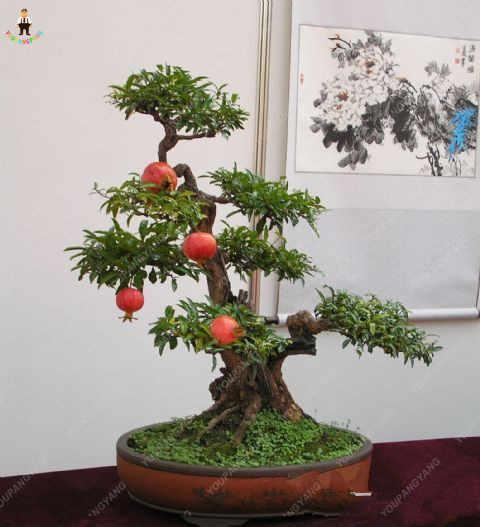 50 قطع الأحمر الرمان الفاكهة المنزل النباتات في الهواء الطلق لذيذ Fruta شجرة بونساي كبيرة جدا الحلو ل ديكور حديقة المنزل