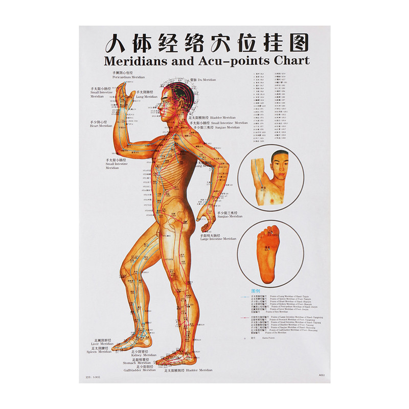 7pcs/set Acupuncture Massage Point Map Chinese&English Meridian Acupressure  Points Posters Chart Wall Map For Medical Teaching