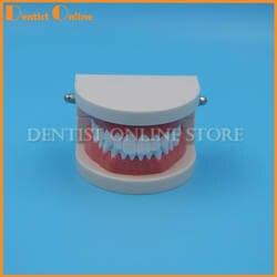 1 шт. протезы зубы зубной модели Clear ГУМ Стандартный Typodont модели 28 шт. зубов для медицинских наук стоматолог обучения исследование