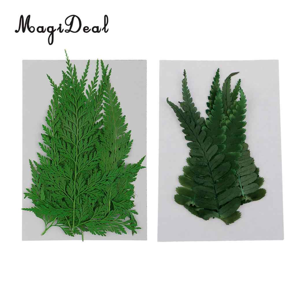 22pcs Green Natural Press Fern Leaves Pressed Dried Flowers Dry Leaves for  DIY Arts Crafts Bookmark Scrapbooking Card Making