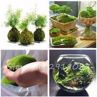 Decorative-Grass-Seeds-200-PCS-Sphagnum-Moss-Bonsai-Seeds-Lovely-Moss-Ball-Seeds-Ornamental-plant-Potted.jpg_200x200