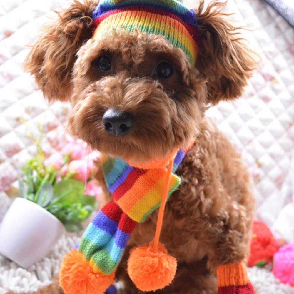 ᐂCaliente perro ropa para perro pequeño invierno cálido arco iris ...